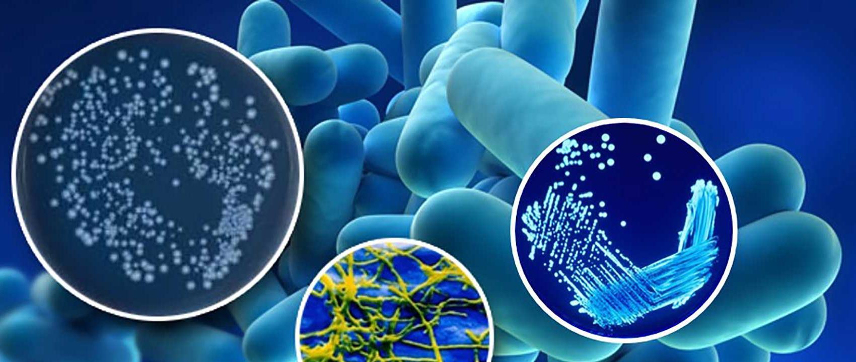 ASHRAE Güncel Legionella Standardını Yayınladı
