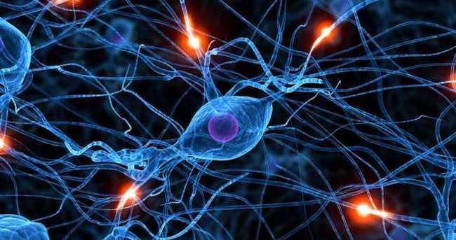 """Türk bilim insanları """"insan nöral kök hücreleri ile elektrik üreten biyoyakıt hücresi"""" geliştirdi"""